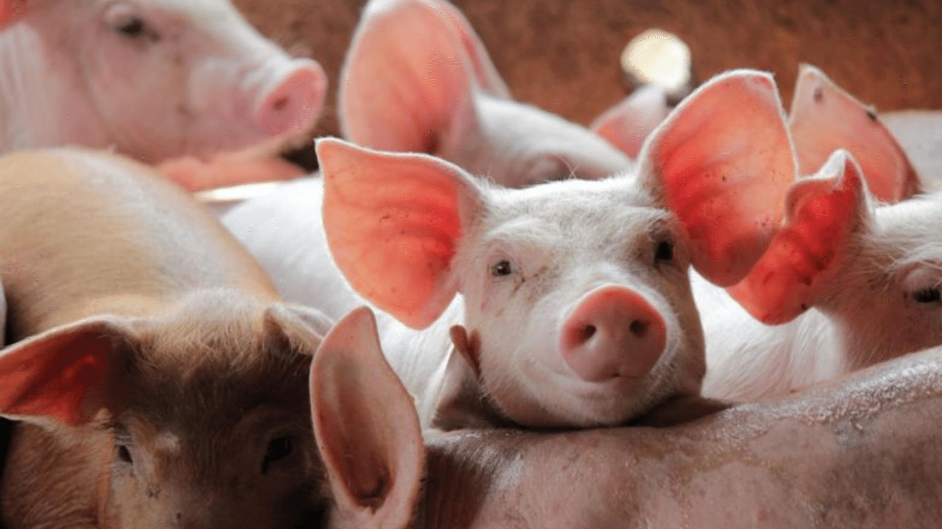 中國政府公佈了可以飼養肉類的動物清單草案